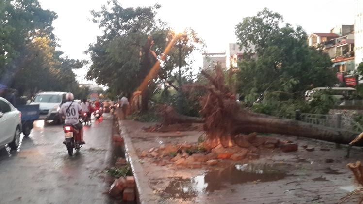 Fallen trees - Hanoi Storm - Life in Hanoi, Vietnam